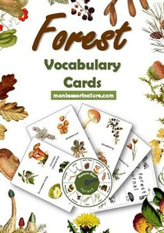 Forest Vocabulary Cards and Montessori Cards for Kindergarten First Second Graders This file includes: - 36 themed vocabulary cards (four to one page) with forest elements - plants wild berries wildflowers trees pine cones fungi with large unique Maria Montessori, Waldorf Montessori, Montessori Science, Montessori Classroom, Preschool, Forest School Activities, Nature Activities, Learning Activities, Outdoor Activities