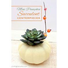 Mini Pumpkin Succulent Centerpiece Craft ❤ liked on Polyvore featuring home, home decor, thanksgiving home decor, pumpkin centerpieces, thanksgiving centerpieces, succulent centerpieces and pumpkin home decor