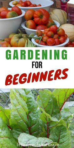 Growing vegetables at home doesn't have to be complicated. Gardening for beginners can be simple and fun. Home gardening is a great hobby that will give you plenty of fresh air and sunshine. Gardening is also great exercise. The best part of growing your own food is knowing where that food comes from.