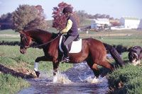 Wary of Crossing Water~An eventing trainer explains how to safely encourage a horse to walk through water.