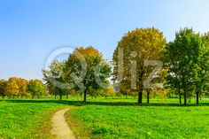 Qdiz Stock Photos | Autumn Nature with Footpath and Trees on Field,  #autumn #background #beautiful #beauty #blue #branch #cloud #colorful #day #environment #field #foliage #grass #green #idyllic #land #landscape #lawn #leaf #leaves #meadow #multicolored #nature #nobody #outdoors #park #path #pathway #plant #scenery #scenic #season #sky #sunlight #sunny #tranquil #tree #view #way #weather #wood #yellow