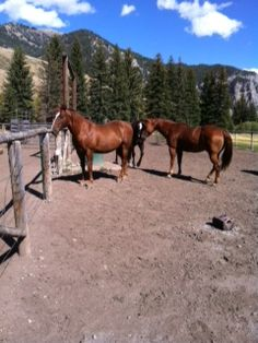 Horses on ranch in wyoming