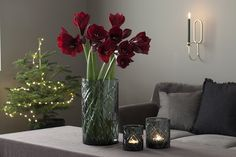 Vakre røde amaryllis i Wien vase.