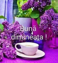 Imagini buni dimineata si o zi frumoasa pentru tine! - BunaDimineataImagini.ro Good Night I Love You, Good Morning Good Night, My Love, Motto, Quotes, Places, Quotations, Qoutes, Manager Quotes
