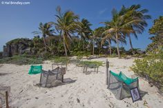 Protected sea turtle nests at Tulum