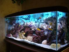 freshwater aquariums | tropical freshwater aquarium in the same way that many people choose ...
