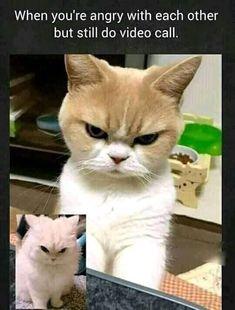 Best Memes, Funny Memes, Hilarious, Memes Humor, Love You Meme, Funny Statuses, Do Video, Kawaii, Funny Tattoos