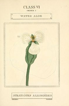 1 - Elements of the science of botany, - Biodiversity Heritage Library, London