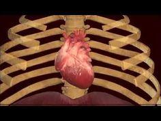 A szíved a szívügyed legyen