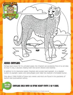 Run with the Cheetahs | Science worksheets, Animal ...