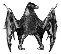 Antique Natural History Image - Bat - Halloween - The Graphics Fairy