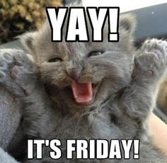 Here it is, a gorgeous kitty version of Rebecca Black singing her song, 'It's Friday'. We think everyone prefers this version, right?