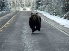 to out run a bear...................:)