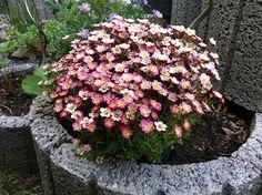 Blumenbeet-Stein