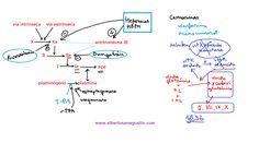 Anticoagulantes y Trombolíticos: mecanismo de acción