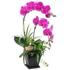 Buy Flowers Online, Orchid Seeds, Balcony Flowers, Cheap Flowers, Cool Things To Buy, Stuff To Buy, Garden Supplies, Tree Branches, Bonsai