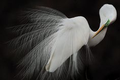 See All 9 Breathtaking Winners from This Year's Audubon Photography Awards | Mental Floss