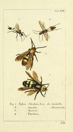 Bd 8 plates (1785) - Gemeinnüzzige Naturgeschichte des Thierreichs : - Biodiversity Heritage Library