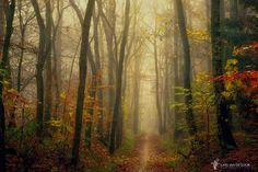 Gump's Path by Lars van de Goor on 500px