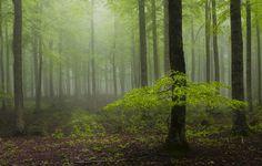 in mist