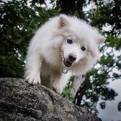 Meet @thisdogorbits #dogsofinstagram #cute #instagood #dogs #L4L