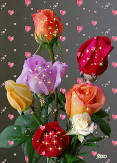 Lavender, Yellow, Orange and Red Roses Flowers Gif, Beautiful Rose Flowers, Love Rose, Amazing Flowers, Beautiful Flowers, Beautiful Love Pictures, Beautiful Gif, Good Morning Rose Gif, Beau Gif