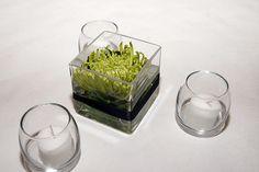 square vase w/green flower centerpiece