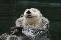 Happy Otter | Flickr - Photo Sharing!