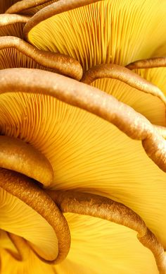 Mushrooms by Taratorki, via Flickr - Mmmm, one of my favorite foods