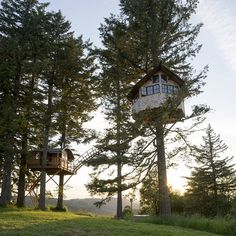 Now that's a treehouse   Foster Huntington