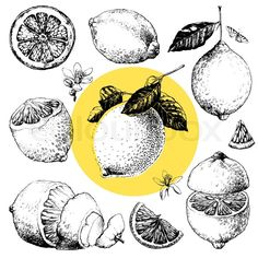 Illustration about Hand drawn illustrations of beautiful yellow lemon fruits. Illustration of hand, summer, citrus - 32701643 Art And Illustration, Gravure Illustration, Illustrations, Lemon Drawing, Lemon Art, Drawing Sketches, Drawings, Art Plastique, Art Sketchbook
