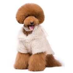 Luxurious Lion Cashmere Coat for Pet Clothes & Fashion for Dog Dress Apparel-Size XXL