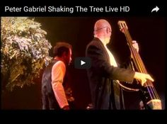 Peter Gabriel Shaking The Tree Live HD - YouTube  schuerbuikske Sep 25, 2010 youtube.com —  In honor of Women's Day...