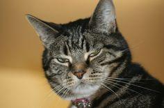 Oscar has killer look.