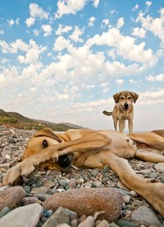 Photograph Playful Dogs On The Beach by Kuzeytac LSI on 500px
