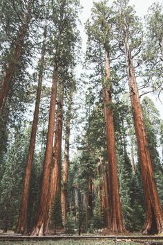 Sequoia National Park, California by jasde