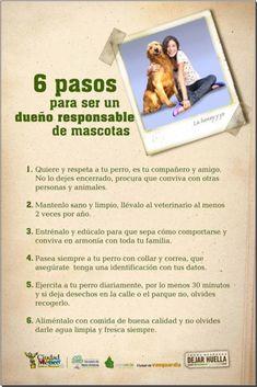 6 pasos para ser un dueño responsable de mascotas.