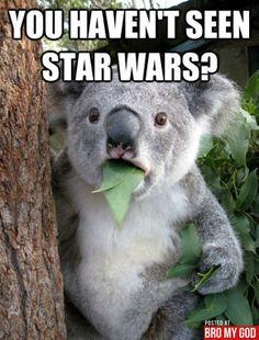 koalas are funny. koalas are smart. koalas are so cute. koalas are brave. koalas are herbivores. Baby Animals, Funny Animals, Cute Animals, Funny Koala, Wild Animals, Awkward Animals, Funny Animal Faces, Jungle Animals, Tierischer Humor