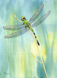 beautiful watercolor of a green dragonfly