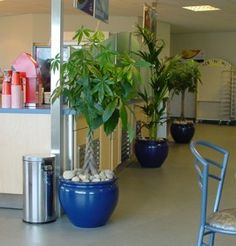 Interior plants with architecural design minded upgrade containers.. a win-win