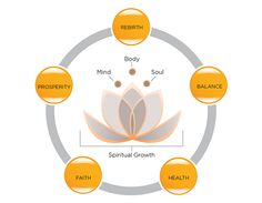 Meaning of the Lotus Flower - the Symbol of Serenity Now