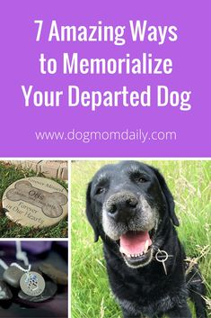 Ideas to memorialize your amazing dog. Dog Grief, Pet Loss Grief, Pet Memorial Gifts, Dog Memorial, Memorial Ideas, Custom Dog Portraits, Baby Portraits, Pet Cemetery, Dog Spaces