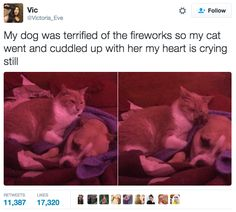 39 Tweets About Cats That Make Us Laugh Every Single Time - I Can Has Cheezburger? - Funny Cats   Cat Meme   Cat Pictures
