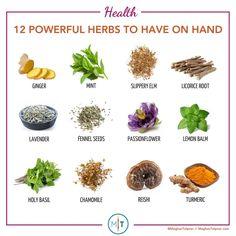 Herbs For Energy, Living Libations, Slippery Elm, Turmeric Tea, Lemon Balm, Fennel Seeds, Medicinal Herbs, Drying Herbs, Herbal Medicine