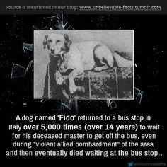 A heart-rending story about a loyal pet.