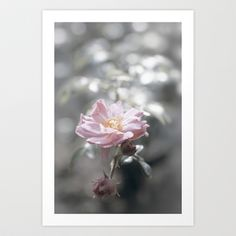 "Art Print / MINI (7"" x 10"") Originalaufnahme (originalaufnahme) Roses at Backlight by Originalaufnahme $18.00  #posters #artworks #graphic design #texture #inspiration #artists #stretched canvas #illustrations #room #products #pretty #colour #inspiration #Wall Art #Home Decor #Throw Pillows #Cards #Mugs #Shower Curtains #Wall Tapestries#Duvet Covers #Rugs #Wall Clocks #Art Prints #Framed Art Prints #Canvas Prints #Editions #Wall Tapestries"