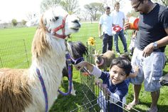 Spring Extravaganza March 29, 2014 - Pavilion Park residents welcomed spring with a petting zoo.