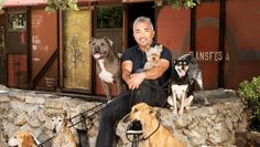 "Cesar Millan hunts for a ""Leader of the Pack"" in his new TV series - CBS News"