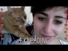 5 Ways Your Cat Shows You Love – Meowingtons