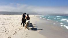 Reiten | Pferde | horse riding | Strand | Beach | South Africa | Kapstadt | Cape Town | Noordhoek Beach | braune Pferde | weißes Pferd | Travel | Travelblogger | Aktivitäten Kapstadt | Activities Cape Town | Erlebnis Kapstadt | reiten am Strand